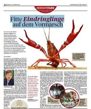 Interview mit Pforzheimer Zeitung
